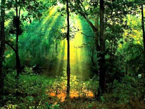 download calming forest picture - photo #41