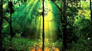 RELAXING MUSIC SOUNDSCAPE for Sleep, Meditation, Yoga, Study and Work (Rainforest)