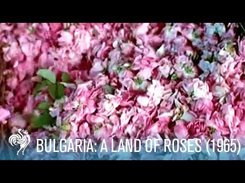 A Travel Guide to Bulgaria in the '60s: A Land of Roses (196