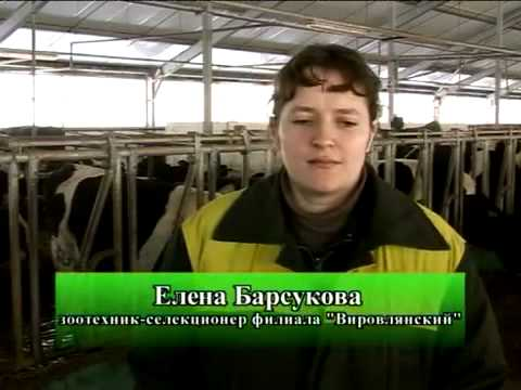 г. городок витебская обл.знакомства городок
