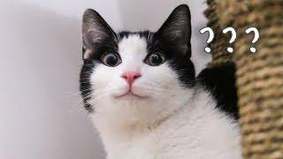 中分身世解密-如何领养一只猫咪-到家之后需要注意什么