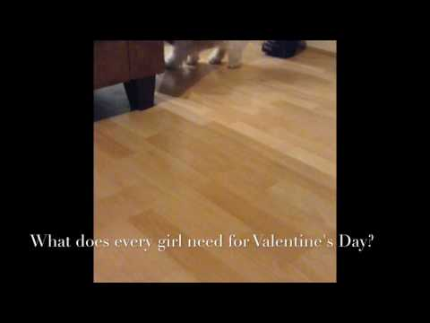 Cute dog Betty Valentine's Day trick video. Betty Wilson