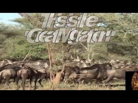 "The Adventures of Serengeti National Park with Bushbuck Safaris Ltd. - ""The Endless Plains"""