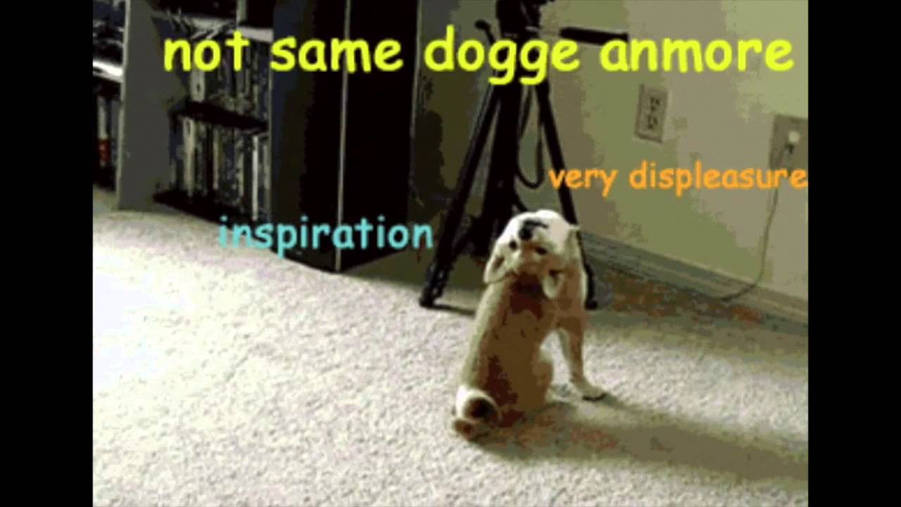 Wow Such Try Doge