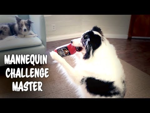 Epic Dog Mannequin Challenge - Gansta Style - dog training tricks