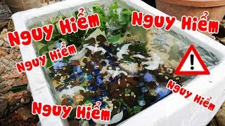 Thử thách nuôi cá ngoài công viên. Hồ cá giá rẻ cực chất chỉ 195k