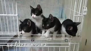 白黒4兄妹だったゾロ&ポワン 大きくなってもとっても可愛い兄弟です!
