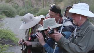 Rattleless Rattlesnake of Baja California
