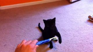 The Cat & The Toothbrush