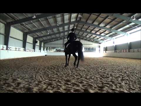 Stephen Clarke dressage clinic with Jet (October 13, 2012)