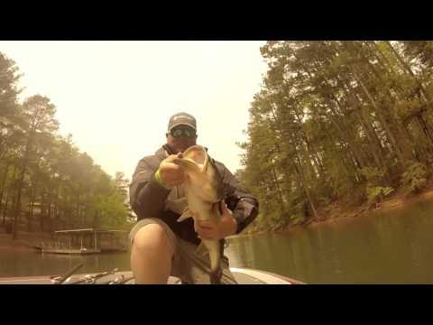 10 lb largemouth bass!! 10# 13 oz, Lake allatoona Georgia. (Southern states fishing)