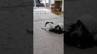 강아지 배변훈련!(모카~잘했어!)