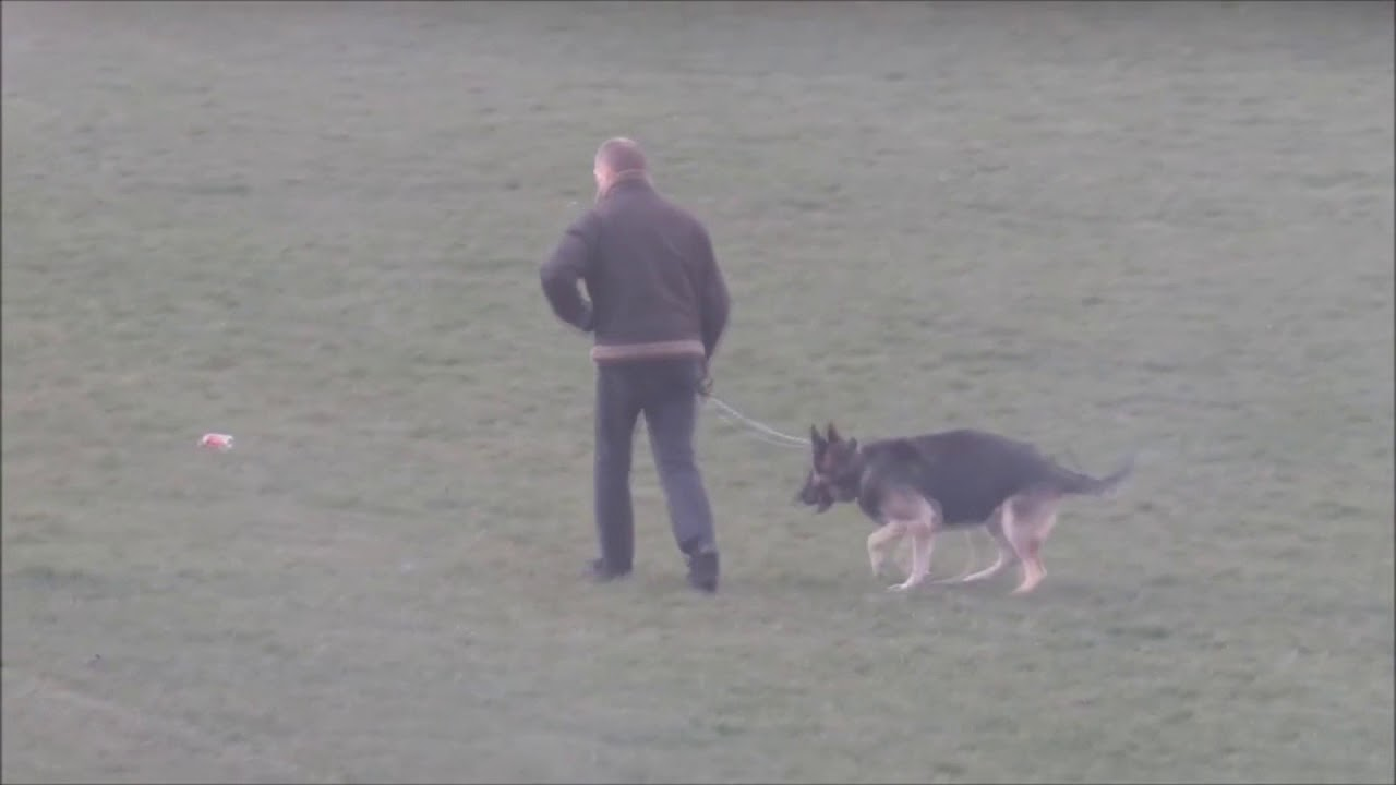 Distracted Dog wants to poop but can't go while owner's patience wears thin