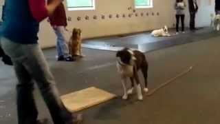Best Obedience Class Ever