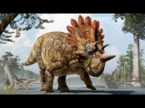 A new Ceratopsids discovered!