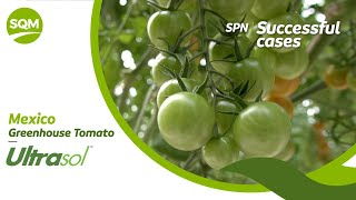 SPN Successful cases, Tomate invernadero – México