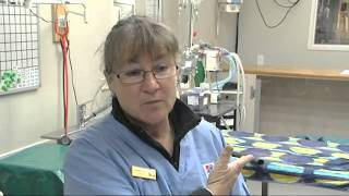 A Career As A  Vet Nurse  (jtjs72012)