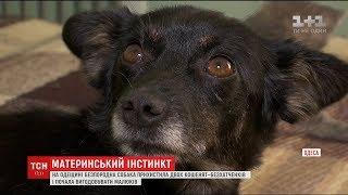 Дива природи: на Одещині дворняга вигодувала двох кошенят-безхатченків