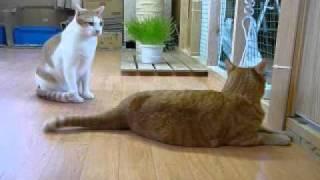 寝込みを襲われる猫・1 thumbnail