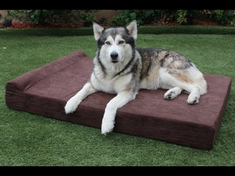 "new-xxl-extra-large-dog-beds---xxl-orthopedic-memory-foam-pet-bed---55""-x-36""-x-6""-clearance"