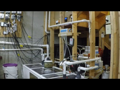 LIVE Tour Of My Sump Room!