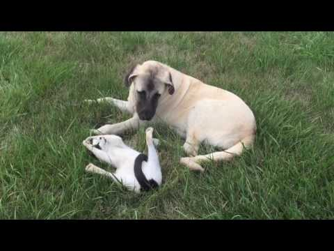 Buddy, The Puppy, with Righty, The Cat