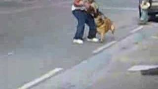 Protection Dog Training In Public (reality Check) 1