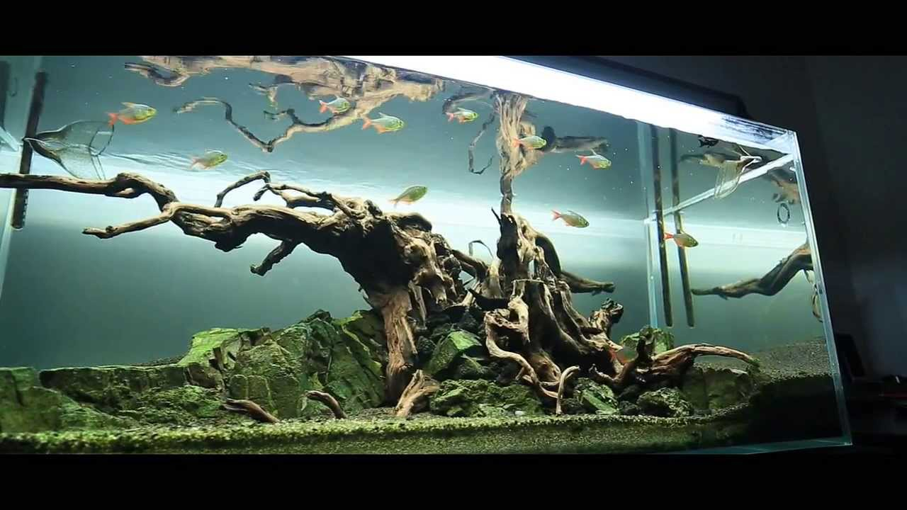 The Tree After 4months Of Destruction Without Maintanance Water Change Without Plants Welcome To My Dark Biotope Aquarium Aquascape Aquascape Aquarium