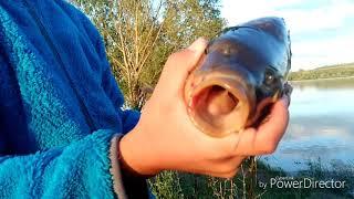 ⚡Ловить карпа! Едем на рыбалку в Чувашию, в Карамышево!