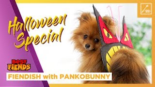 JoJo Costume for Your Dog!