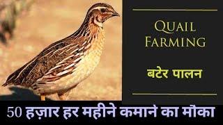Quail Farming    बटेर पालन    Poultry farming    Hello Kisaan