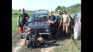 Охотничье хозяйство Сербии (охота на перепела)