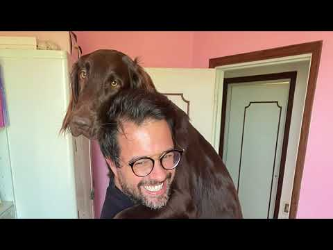 Quarantena da cani  Kessie, Flat Coated Retriever