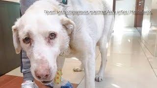 Алабай который плачет за решеткой Спасение азиата Гретты a dog that cries in pain