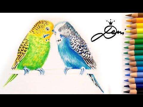 Wellensittiche zeichnen🐤 Vögel malen 🐦How to Draw a Budgerigar Bird 🐥 как се рисува папагалче