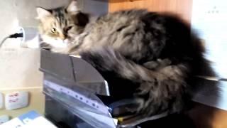 Кошка лежит на полке.
