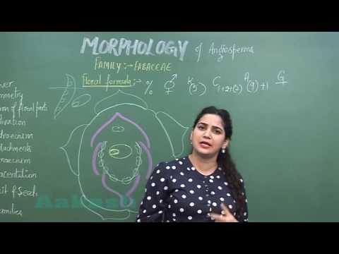 Morphology of Angiosperms-II_Families