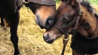 Sagamore Farm Foaling Season