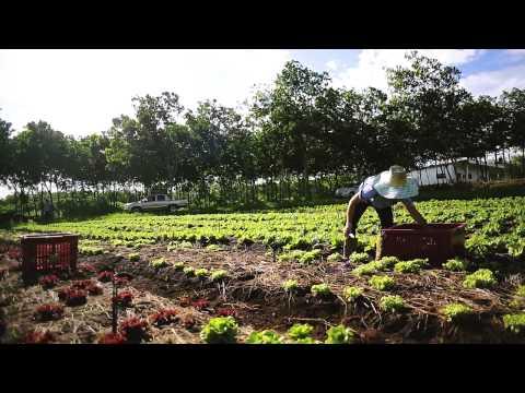 WB Organic Farm Small