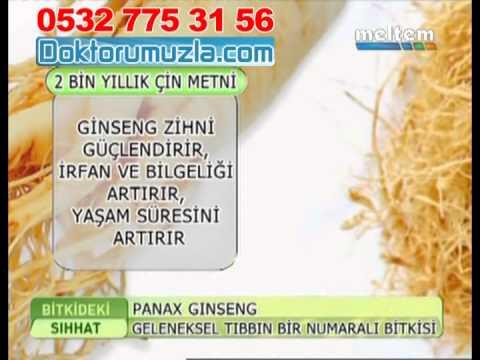 panax ginseng faydaları, +90 532 775 31 56