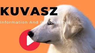 All Dogs Breeds - Kuvasz Dog Breed Information And Personality