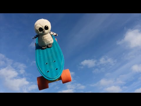 Owl on Skateboard