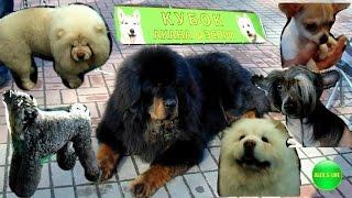 Выставка собак Киев 2017 Кубок Акана Эспри!Dog show 2017!