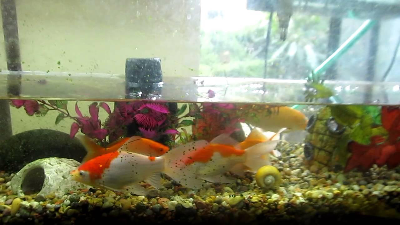 Freshwater aquarium fish water change - Fish Tank 55 Gallon Water Change
