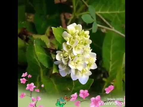 Flowers in nature !!! (HD)