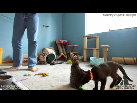 Olympian Kittens - Cleaning Up An Oops
