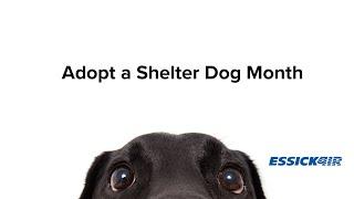 Adopt a Shelter Dog Month   Boo + Leevon