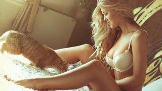Смешные картинки про кошек и котят Выпуск №49  FUNNY CATS СМЕШНЫЕ КОШКИ