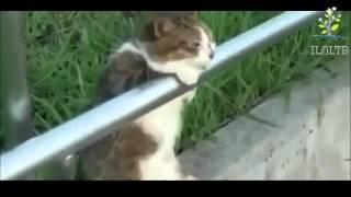 Просто невозможные видео ПРИКОЛЫ с кошками!