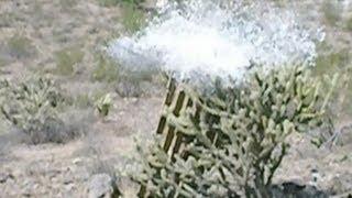 "12-Guage Shotgun & Barbisol Shaving Foam = Boom! Remmington 870 Express 18"" Pump"